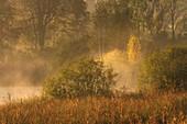 Oktobermorgen am Dietlhofer See, Wald bei Weilheim, Bayern, Deutschland