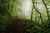 Morgenstimmung im frühlingshaften Buchenwald, Wald in Bayern, Deutschland