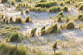 Dune landscape in the evening light at Sable d´Or les Pins near Cap Frehel in Brittany, France.