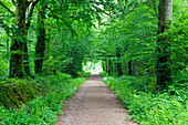 Forest path in the forest of Saint-Sauveur-le-Vicomte, 50390. Cotentin peninsula Normandy.