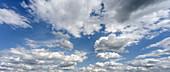Blooming Cornfield in Front of BER Airport, Clouds, Berlin Schoenefeld