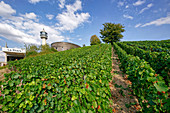 Wine growing in Champagne, Montagne de Reims, Route du Champagne, Le Phare, Verzenay lighthouse, France