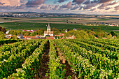 Wine growing in Champagne, Montagne de Reims, Ville-Dommange, village church, France