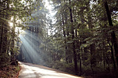Road with sun rays in the morning forest, Big Basin State Park, California, USA.