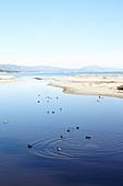 Lagoon with water birds in Santa Barbara, California, USA: