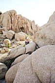 Junge sitzt auf einem Felsen der Jumbo Rocks im Joshua Tree Park, Kalifornien, USA