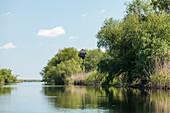 Danube Delta, observation tower at Lacul Merhei in April, Mila 23, Tulcea, Romania.