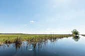 Danube Delta in April, boat trip from Lacul Merhei to the Letea Forest on the horizon, Letea, Tulcea, Romania.