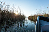 Danube Delta in April at sunset, a boat pushes through a narrow arm of water to Lake Lacul Radacinos, Mila 23, Tulcea, Romania.