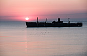 The shipwreck Evangelia and seagulls at sunrise on the Black Sea coast in Costinesti, Constanta, Romania.