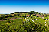Chapel in the vineyard with a view of Breisach and the Rhine plain, near Ihringen, Kaiserstuhl, Baden-Württemberg, Germany