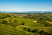 Vineyards and view of the Black Forest, near Ihringen, Kaiserstuhl, Baden-Württemberg, Germany