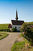 Chapel in the vineyards, Eichert Chapel, Jechtingen, Kaiserstuhl, Baden-Württemberg, Germany