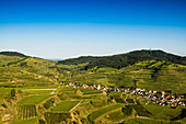 Vineyards, near Oberbergen, Kaiserstuhl, Baden-Württemberg, Germany