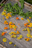 Herbs and flowers on drying grids, homemade with herbs from your own garden