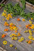 Kräuter und Blüten auf Trockengitter, Selbstgemachtes mit Kräutern aus dem eigenen Garten