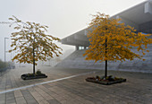Biosphaere, Volkspark Potsdam, Potsdam, State of Brandenburg, Germany