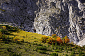 Autumn in the Lalidererbachtal, Hinterriß, Karwendel, Tyrol, Austria