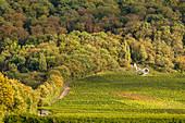 Der Aussichtspunkt Terrior f in den Rödelseer Weinbergen, Kitzingen, Unterfranken, Franken, Bayern, Deutschland, Europa