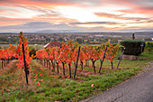 The Weinhalla near Sulzfeld in autumnal dress, Kitzingen, Lower Franconia, Franconia, Bavaria, Germany, Europe