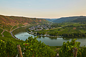 View on summer evening from the Kröver Nacktarsch vineyard over the Moselle to Wolf, Rhineland-Palatinate, Germany, Europe