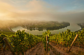 View at sunrise from the Kröver Nacktarsch vineyard to the Moselle loop of Kröv, Rhineland-Palatinate, Germany, Europe
