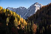 View of the Karwendel massif, in the Vordergund autumn forest, Ahornboden, Hinterriß, Tyrol, Austria, Europe