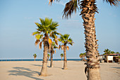 Palm trees on a lonely beach with a beach restaurant on stilts in the background, Forte dei Marmi, Tuscany, Italy