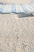 Footprints in the sand of a bird, detail, beach in summer, Forte dei Marmi, Tuscany, Italy