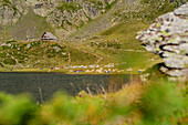 View of Lac Gentau with tent city and herd of animals, Refuge d´Ayous in the background, Lac Gentau, Pyrenees National Park, Pyrénées-Atlantiques, Pyrenees, France