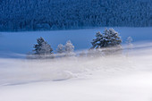Fog-shrouded islet in the frozen Eibsee, Grainau, Upper Bavaria, Bavaria, Germany
