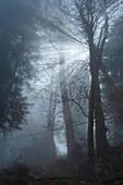 Nebel im Wald bei Kochel, Bayern, Deutschland