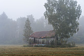 Old shed in the moor, Weilheim, Upper Bavaria, Bavaria, Germany
