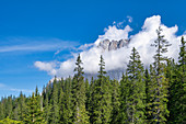Mountain forest in front of the cloud-shrouded Zugspitze, Ehrwald, Tyrol, Austria