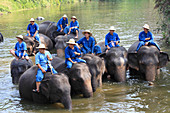 Thailand, Lampang, Elephant Conservation Centre, asian elephants, elephas maximus,