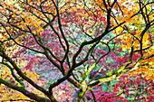 Autumn colors of trees in the Westonbirt Arboretum, Gloucestershire, UK
