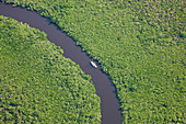 Sail boat & aerial view of rain forest, Daintree River, Daintree National Park, Queensland Australia