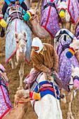 Racing camels, Dubai, United Arab Emirates