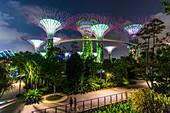 Supertree Grove (futuristische Bäume) in der Nacht in 'Gardens by the Bay', Marina Bay, Singapur