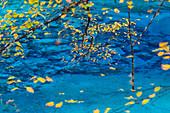 Autumn trees and lake, Jiuzhaigou National Park, Sichuan, China