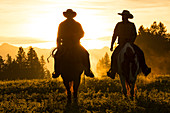 Cowboys riding across grassland with moutains behind, early morning, British Colombia, Canada. Model Released.