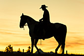 Cowboy & horse in silhouette at dawn on ranch, British Colombia, Canada. Model released.