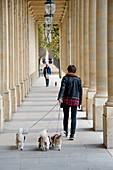 Woman walking three small dogs. Palais Royal, Paris, France.