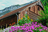 Lush flowers in front of an old wooden warehouse, Isenthal, Switzerland