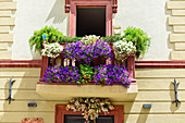 Lush, colorful flowers on a balcony, Foligno, Italy