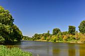 Blick auf den Wald und die Donau in den Donauauen bei Hainburg, Niederösterreich, Österreich