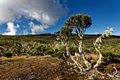 Lichen growth on the Plaine des Chicots