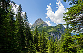View through the summer mountain forest to the Sonnenspitze, Ehrwald, Tyrol, Austria, Europe