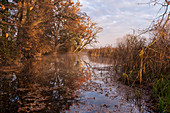 Autumn morning on the Ach, Uffing am Staffelsee, Upper Bavaria, Bavaria, Germany