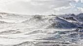 Heavy snowstorm in Sassendalen, central Spitsbergen, Svalbard\n\n